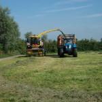 oogst gras voor wintervoer
